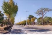 '경기도 숲속 공장 조성 사업'. 지난해까지 목표치 294% 달성